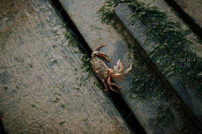 Close-up of a crab on a dock