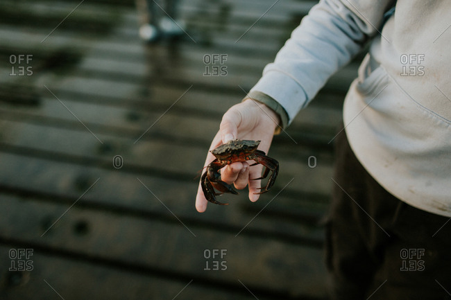 Child holding a crab at the beach