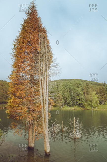 Trees between water near shore