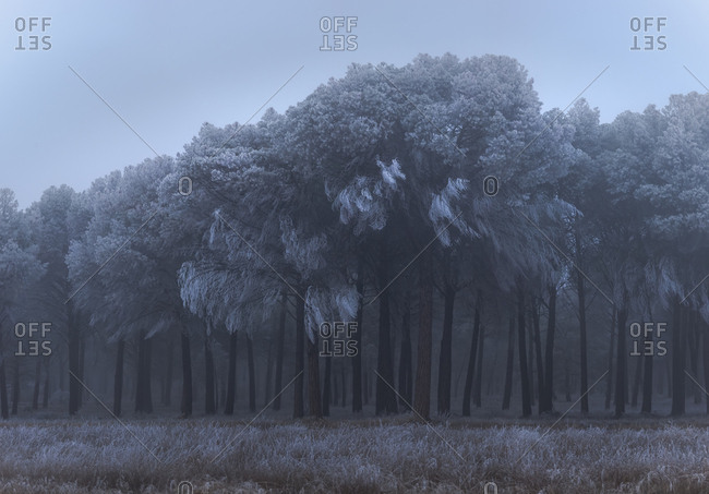 Hoarfrost on trees and grass