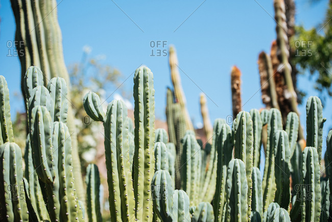 Close up of a cactus plant