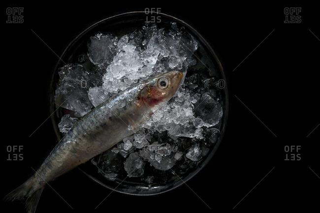 Fresh sardines Raw with ice. Flat lay; top view; On dark background