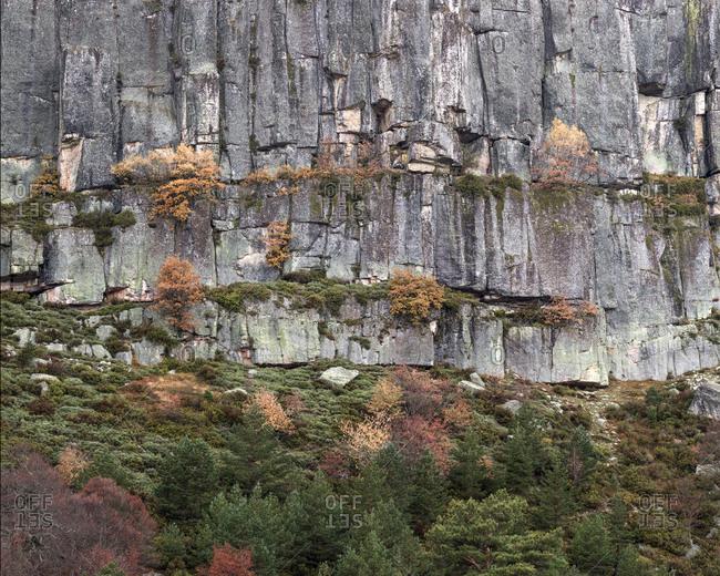 Autumn trees on cliff