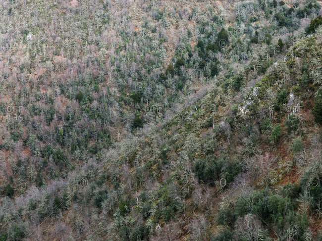 Aerial view of bare trees on slope of mountain in winter time