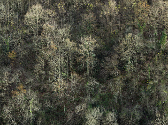 From above view of rare leafless trees on slope of mountain in autumn sunlight