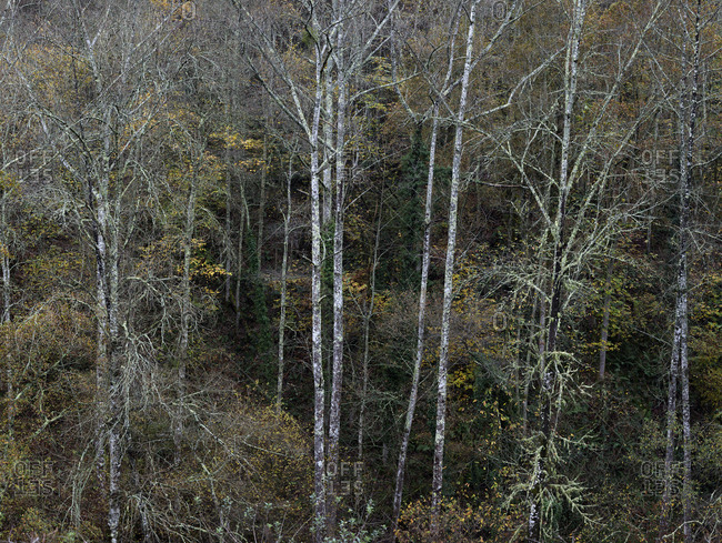 Landscape of leafless trees on tranquil slope in cold season