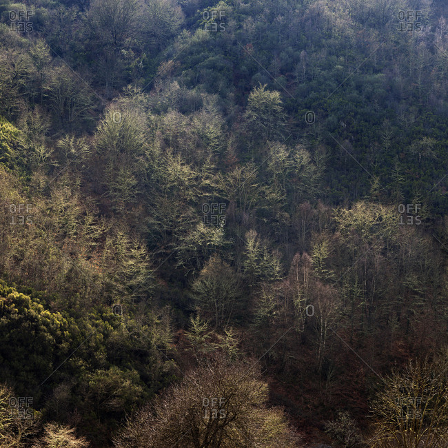 Aerial view of trees growing on slope of mountain in calm light
