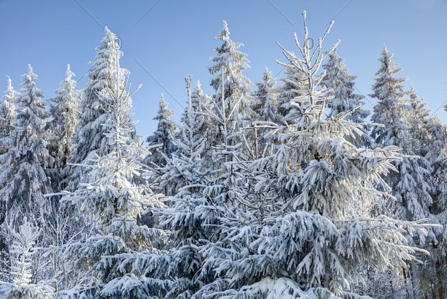Snow, winter landscape, Red Moor, Rhon, Hesse, Germany, Europe