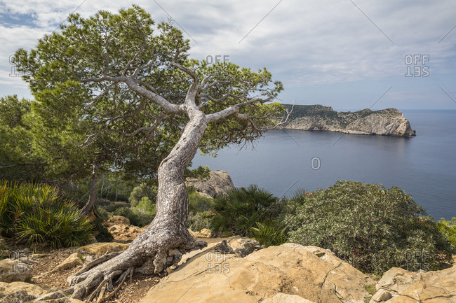 View from the West coast to the island Sa Dragonera (Dragon Island), near Sant Elm, Mallorca, Balearic Islands, Spain