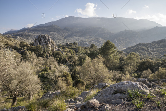 Walk around the Puig Roig, view near Escorca, Mallorca, Balearic Islands, Spain