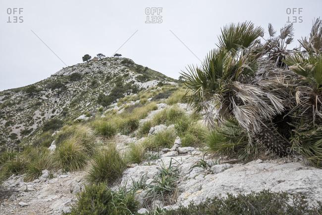 View to the summit of the Talaia d'Alc�dia, hike on the peninsula Alcudia, Mallorca, Balearic Islands, Spain