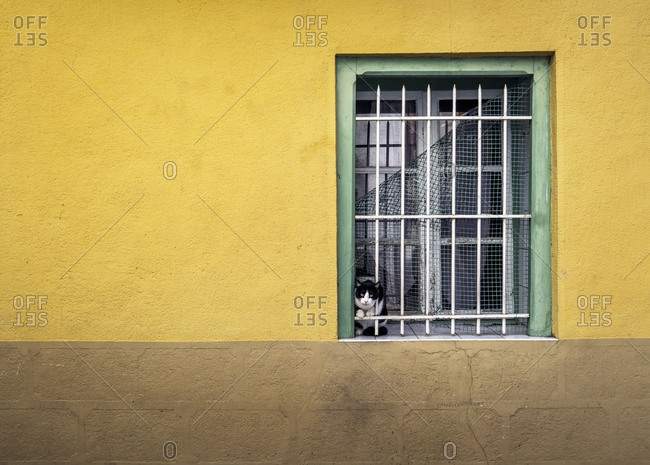 Window and cat in Ille-sur-tet