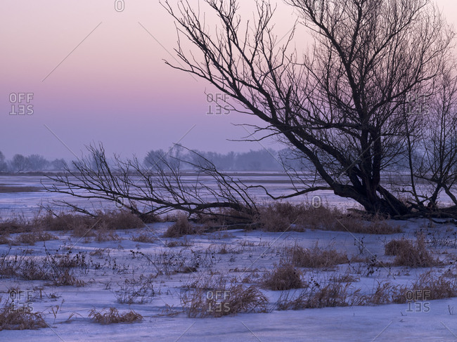 Germany, Brandenburg, Uckermark, Schwedt, Lower Oder Valley National Park, winter morning in the Oder meadow, ice rink, broken willow tree
