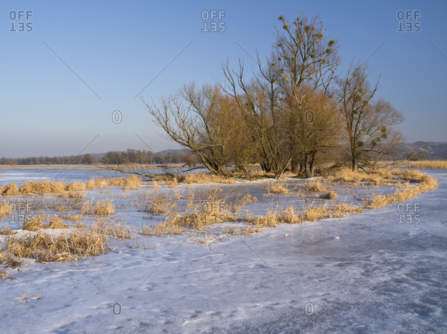 Germany, Brandenburg, Uckermark, Criewen, Lower Oder Valley National Park, winter day in the Oder meadow, ice rink, willow trees