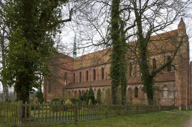 Germany, Brandenburg, Uckermark, Chorin, Cistercian monastery Chorin, brick basilica from 1273, cemetery, blooming blue oysters