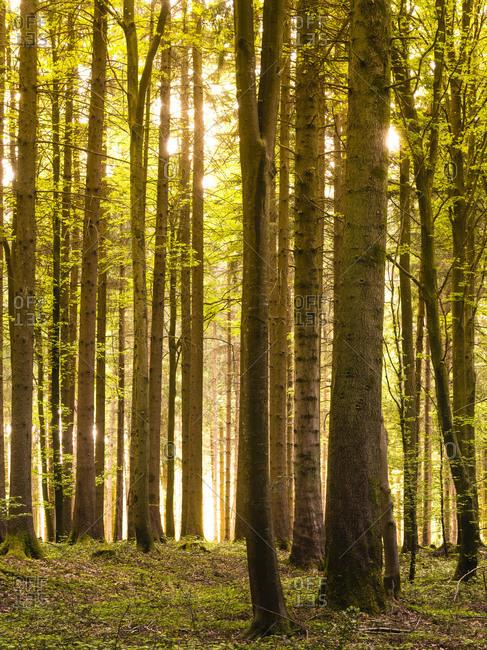 Lights forest in the golden back light