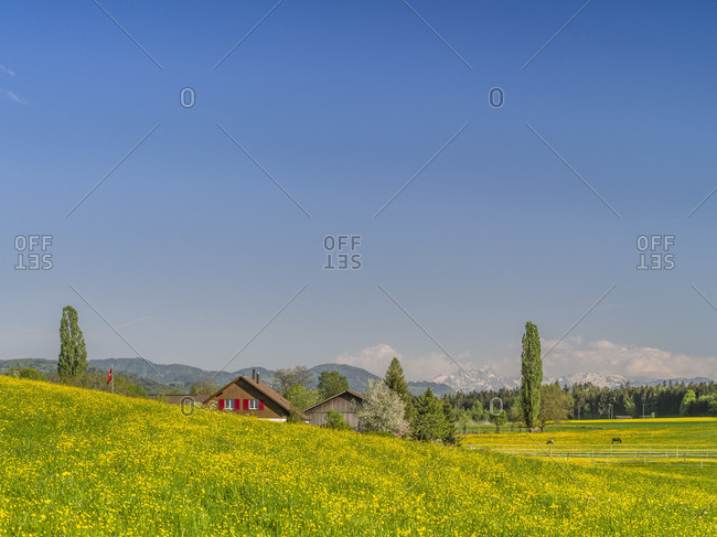 Spring landscape in the Zurich Oberland / Zurich highlands with Alps in the background