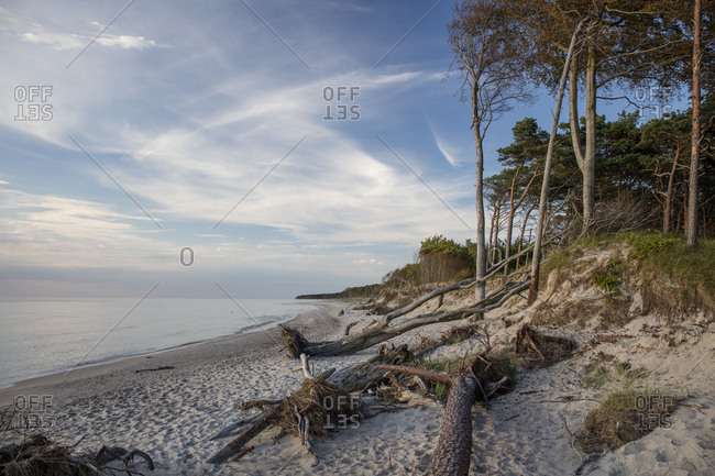 October 27, 2017: Baltic Sea beach, Dar� Forest, Western Pomerania Lagoon Area National Park, Mecklenburg-Vorpommern, Germany