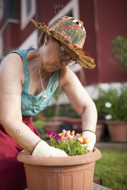 Mature woman gardener, transfers a plant to a large flowerpot in her home garden