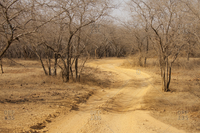 Trail leading through trees in Indian savanna