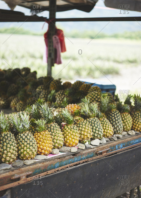 Pineapples lined up ready to be sold, with a field of pineapples growing in the background