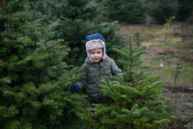 Toddler boy looking for Christmas tree on a tree farm