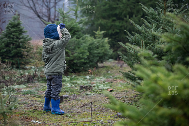 Toddler boy looking for a tree on a Christmas tree farm