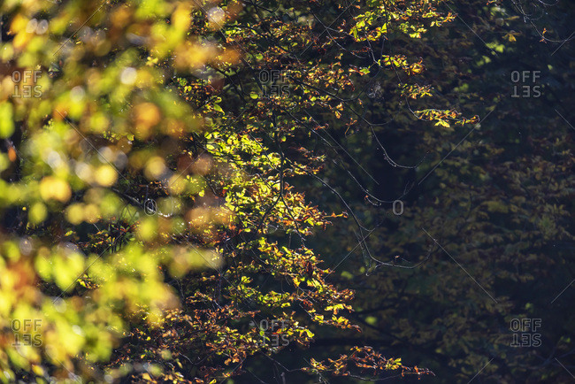 Sunlight on tree branches in a forest