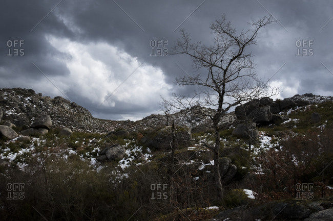Bare tree in winter landscape at Geres National Park