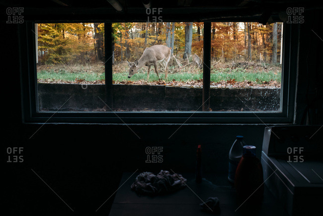 Deer outside a window