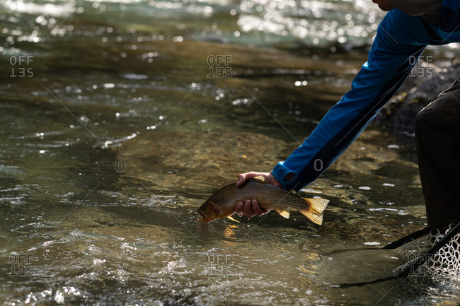 Mid section of fisherman releasing fish in river