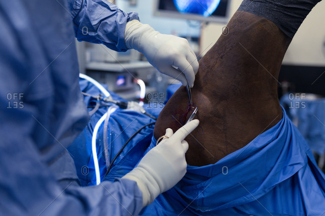 Female surgeon examining a horse in operation theatre at hospital