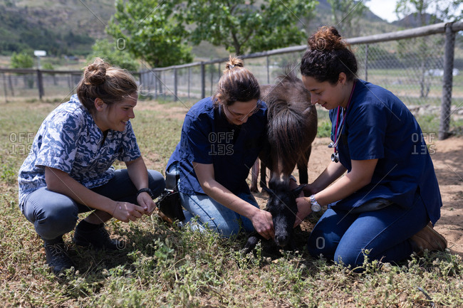 Medical teams feeding grass a young horse in the farm on a sunny day