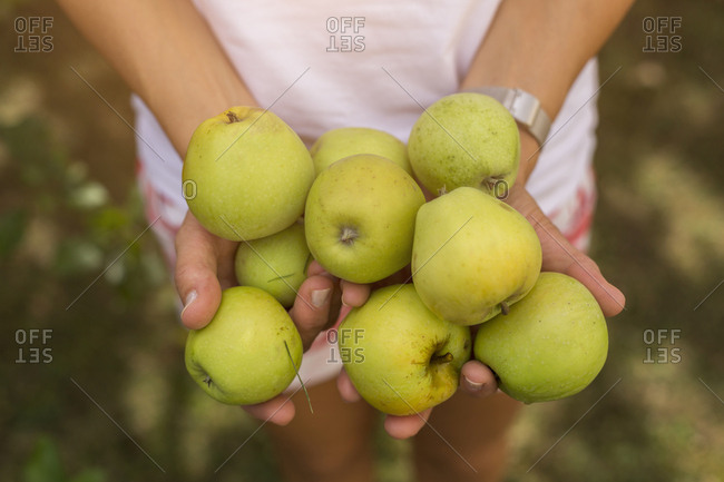 Woman holding harvested apples - Offset