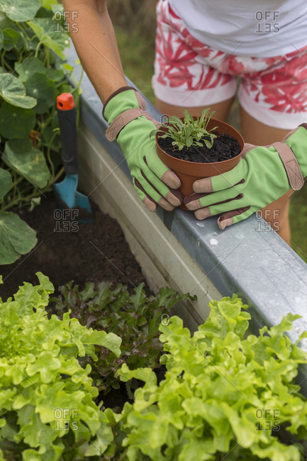 Close-up of woman gardening at raised bed