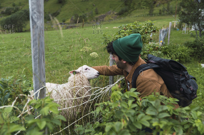 Young man with backpack petting sheep on pasture