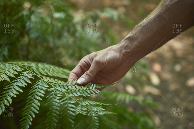 Spain- Canary Islands- La Palma- close-up of a hand touching green forest fern leaf
