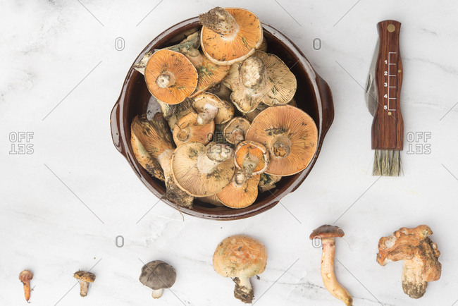 Different edible mushrooms- top view on marble