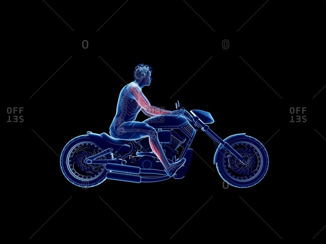 3d rendered illustration of a biker's muscles.