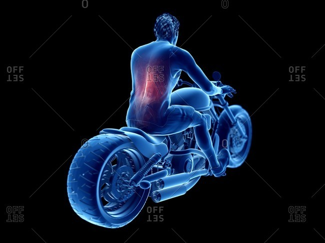 3d rendered illustration of a biker's back muscles.