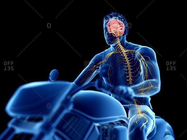 3d rendered illustration of a biker's brain.