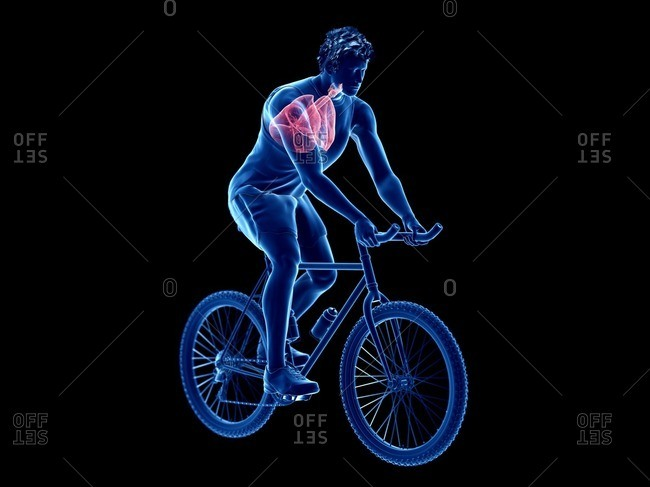 3d rendered illustration of a cyclist's lung.