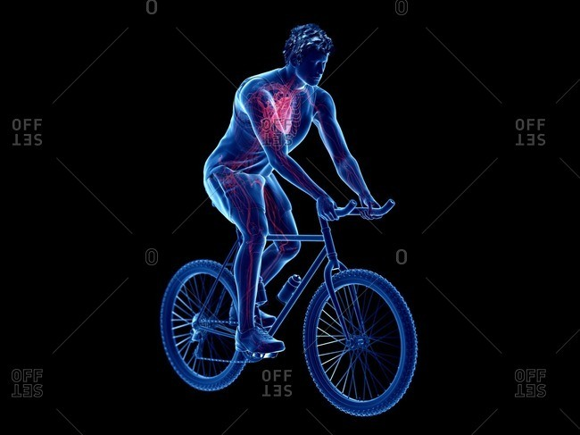 3d rendered illustration of a cyclist's heart.
