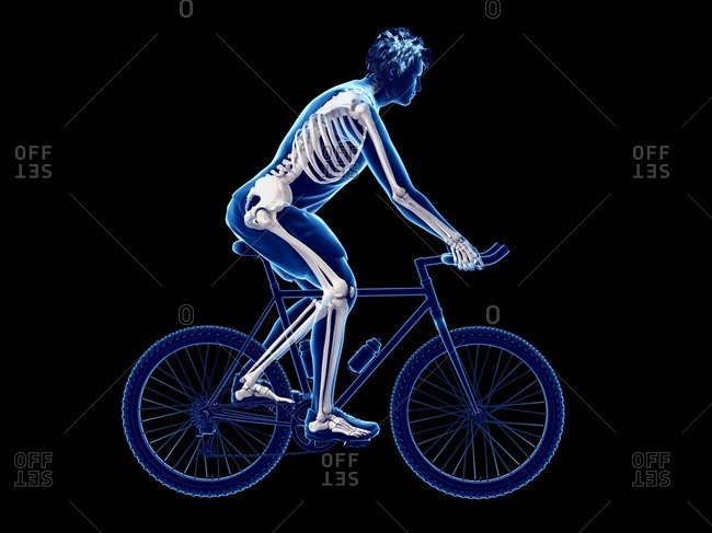 3d rendered illustration of a cyclist's skeleton.
