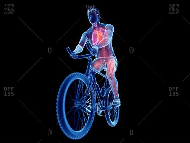 3d rendered illustration of a cyclist's anatomy.