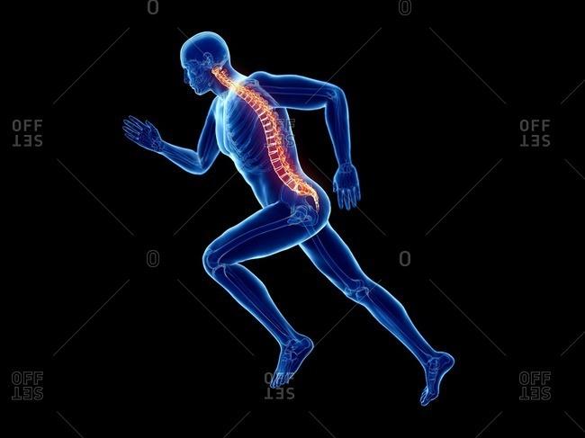 3d rendered illustration of a jogger's spine.
