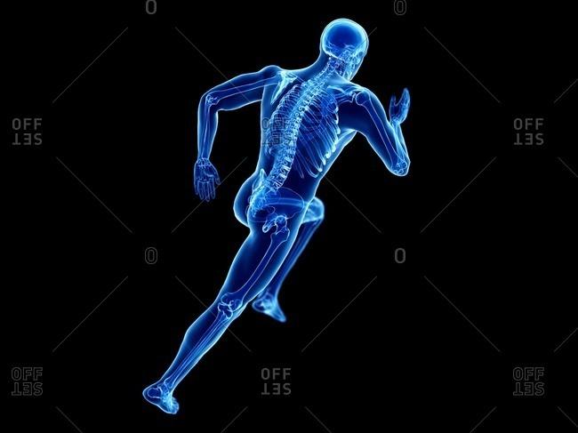 3d rendered illustration of a jogger's skeleton.