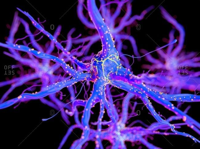 3d rendered illustration of a nerve cell.