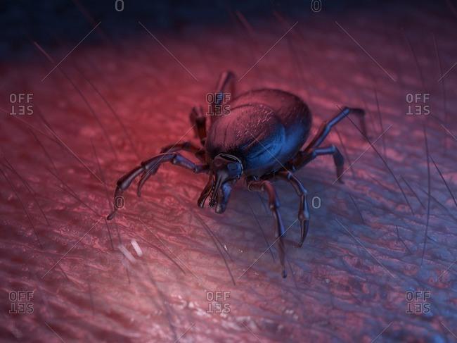3d rendered illustration of a tick on skin.
