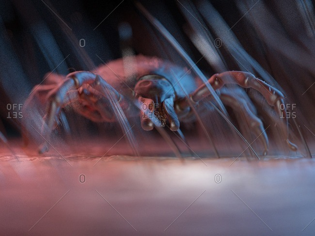 3d rendered illustration of a tick on human skin.